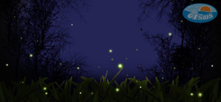ล่องเรือชมหิ่งห้อยยามค่ำคืน (Fireflies watching boat tour)